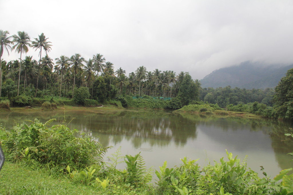 Thattekkad Bird Sanctuary Across the River