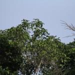 Birding In Biak