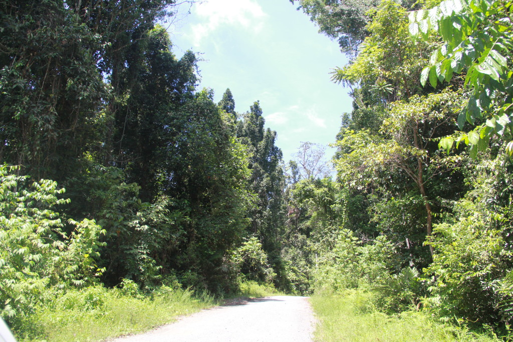 Lowland forest of Hutan Lindung