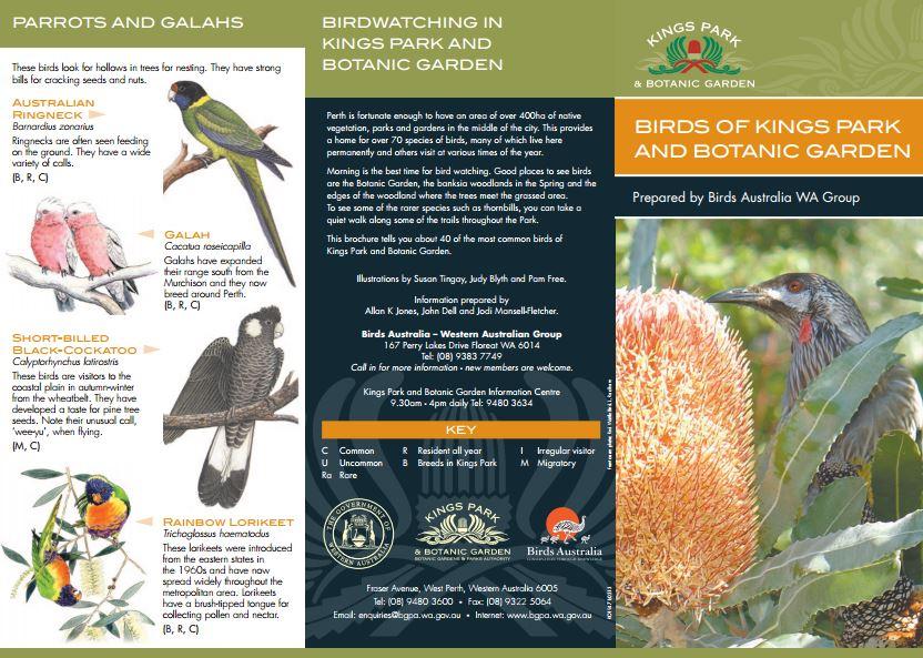 King's Park birds