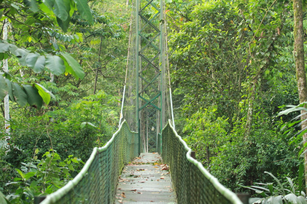Hanging Bridge, Selva Verde