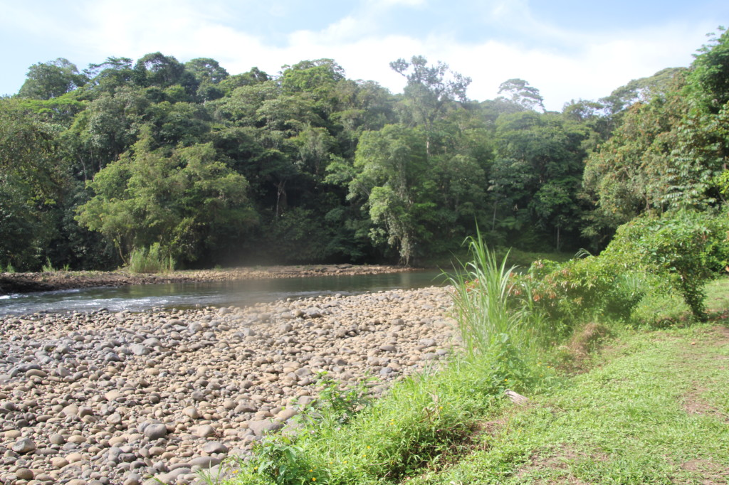 This stream is a great place to see birds, just 10 minutes walk from Selva Verde Lodge
