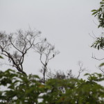 Birds Of Laguna Del Lagarto:  Parrots, Toucans, Aracaris & Trogon