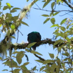 Part 1:  Birding At Savegre, Costa Rica – Resplendant Quetzals
