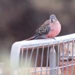 Meet The Parrots – Nallan Station, Western Australia