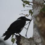 The Birds Of Kakum, Ghana