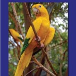 New E-Book To Support Golden Conure Conservation!