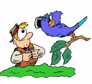 birdingclipart